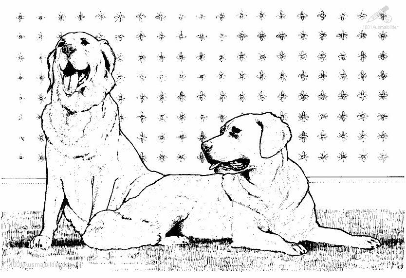 Ausmalbild 2 Hunden