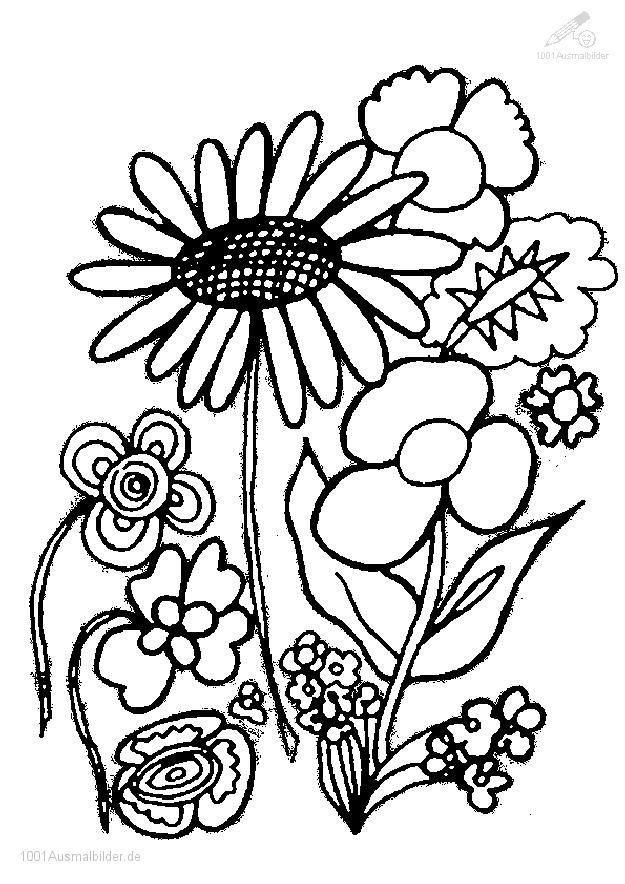 Ausmalbilder Pflanzen Blumen Directtaxizwolle