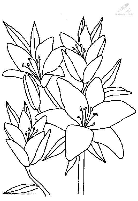 1001 Ausmalbilder Pflanzen Blumen Ausmalbild Blume