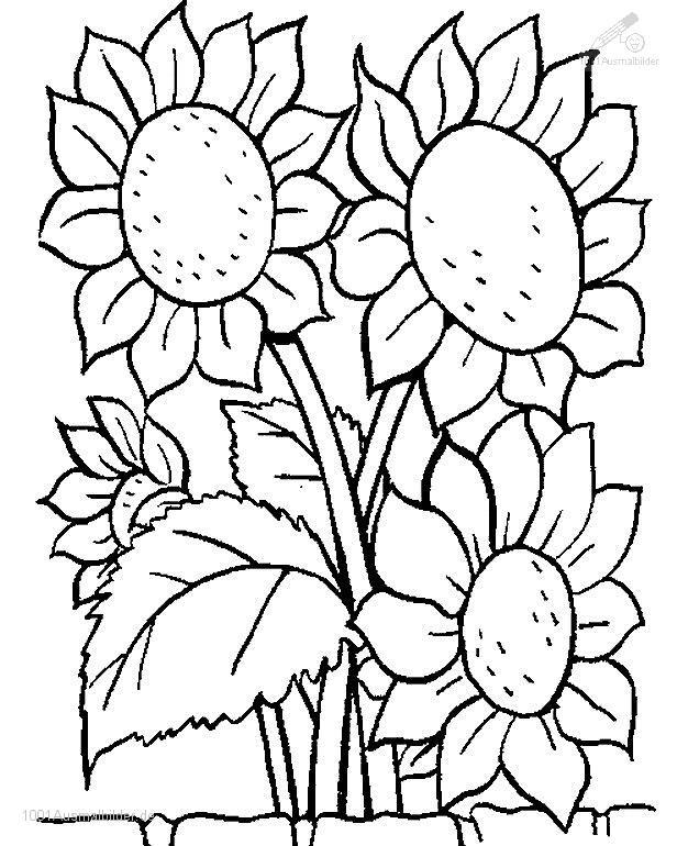 1001 Ausmalbilder Pflanzen Blumen Blume Ausmalbild