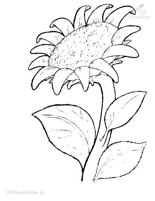 1001 Ausmalbilder Pflanzen Blumen Blumen