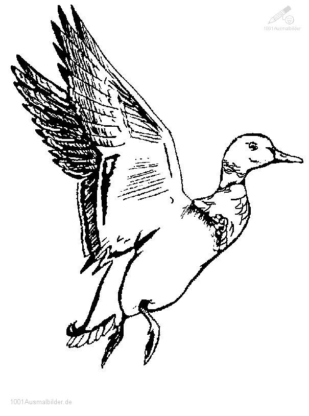Fliegende ente for Duck hunting coloring pages