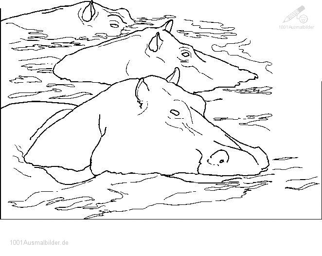 Ausmalbild: ausmalbild-flusspferd-2