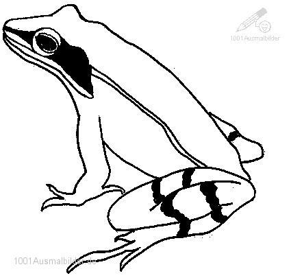 Ausmalbild: ausmalbild-frosch-10