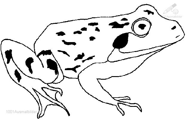 Ausmalbild Frosch