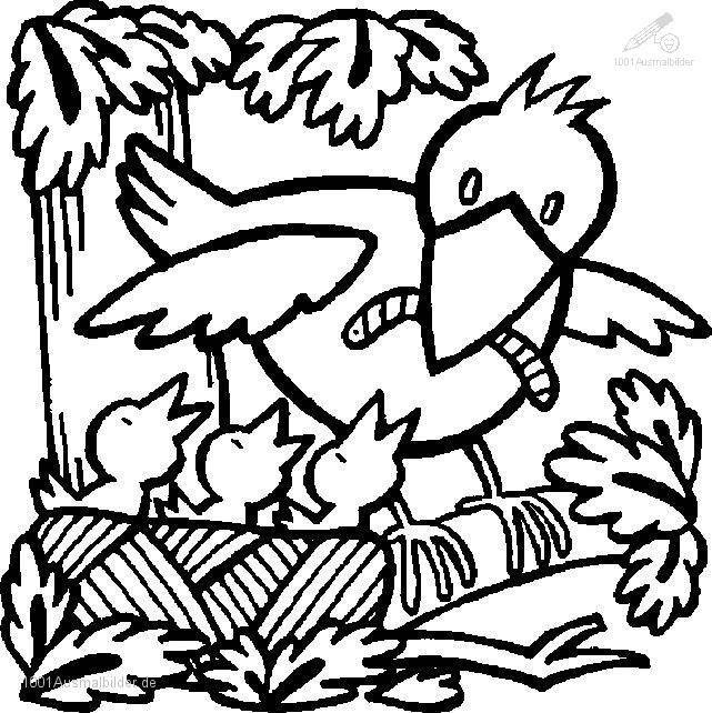 Ausmalbild Fruhling Vogel