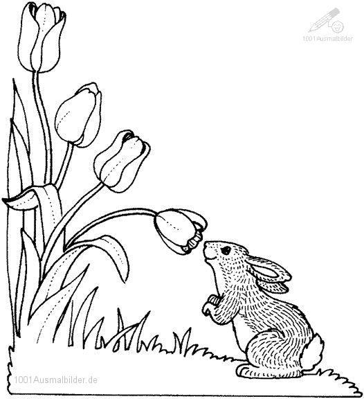 Ausmalbild Fruhling Kaninchen