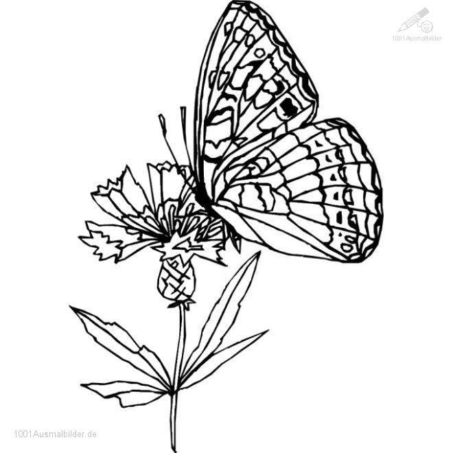 1001 AUSMALBILDER : Jahreszeit >> Fruhling >> Ausmalbild,Schmetterling
