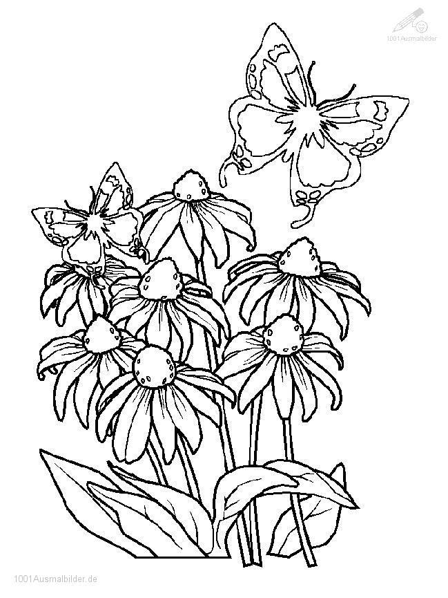 Ausmalbild Fruhling Blumen