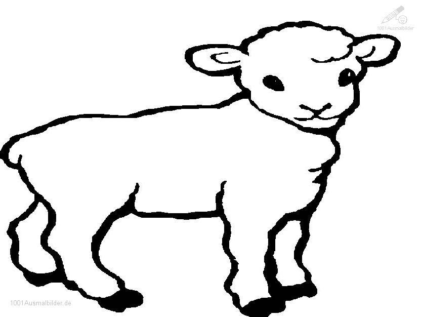 Ausmalbild Fruhling Lamm