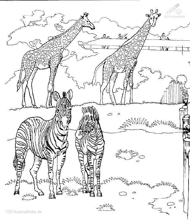 Ausmalbild: ausmalbild-giraffe-12
