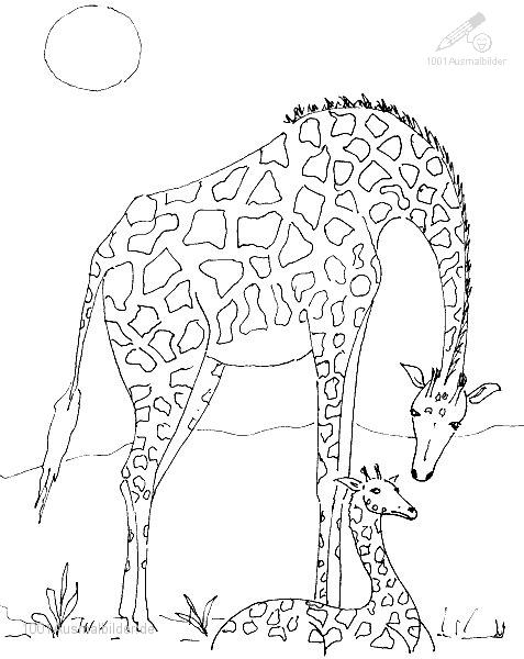 1001 Ausmalbilder Tiere Giraffe Ausmalbild Giraffe