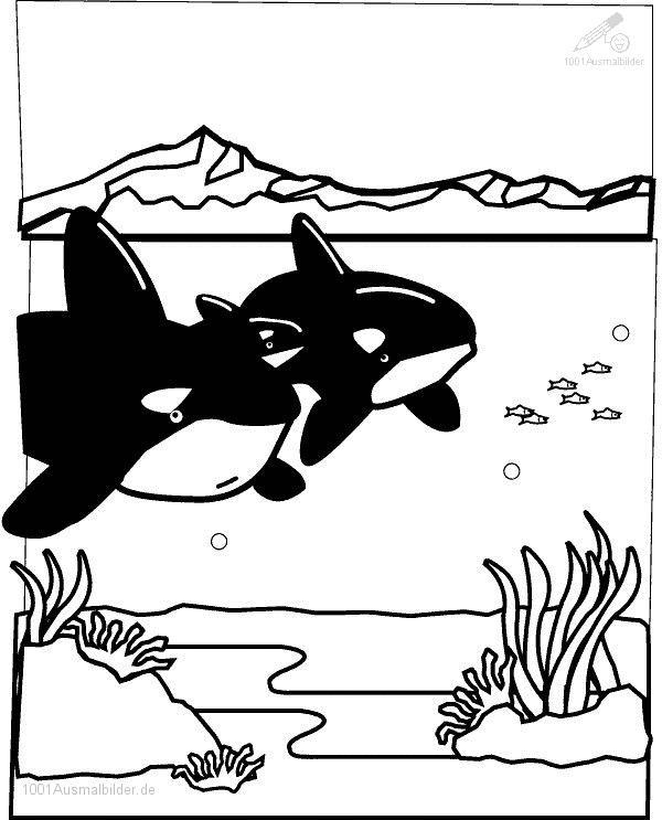 Ausmalbild Haie