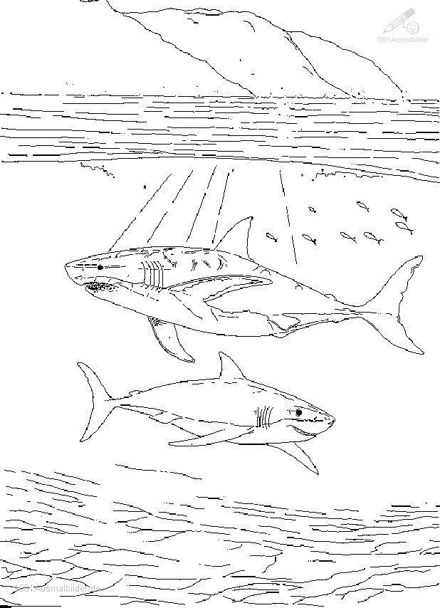Ausmalbild Grosse Haie