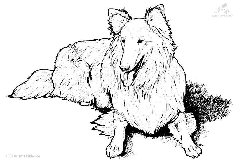 1001 Ausmalbilder Tiere Hund Ausmalbild Hund