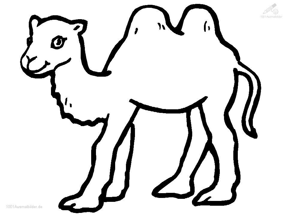 Ausmalbild kamel - Dessiner un chameau ...