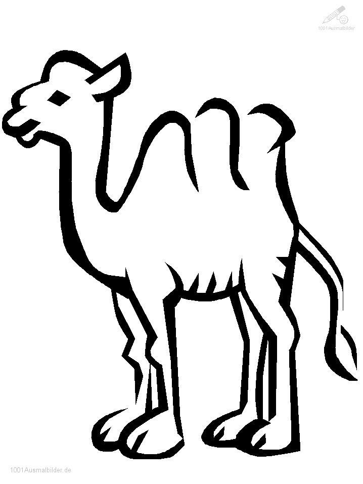 Ausmalbild Kamele