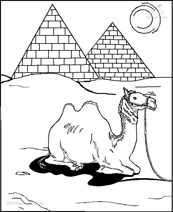 Ausmalbild: ausmalbild-kamel-3