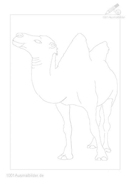 Ausmalbild: ausmalbild-kamel-4