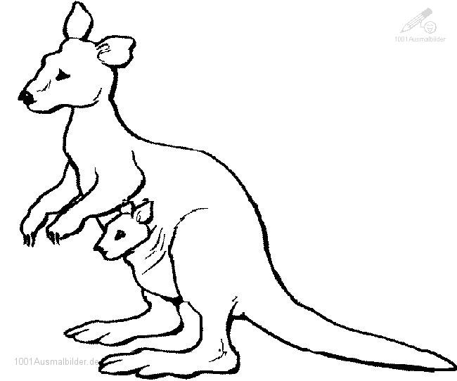 Kanguru Ausmalbild