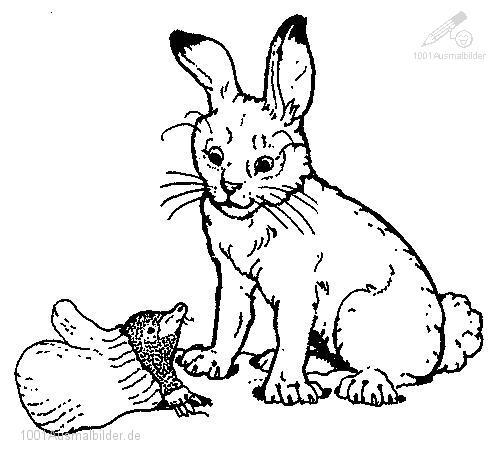 Ausmalbild: ausmalbild-kaninchen-1