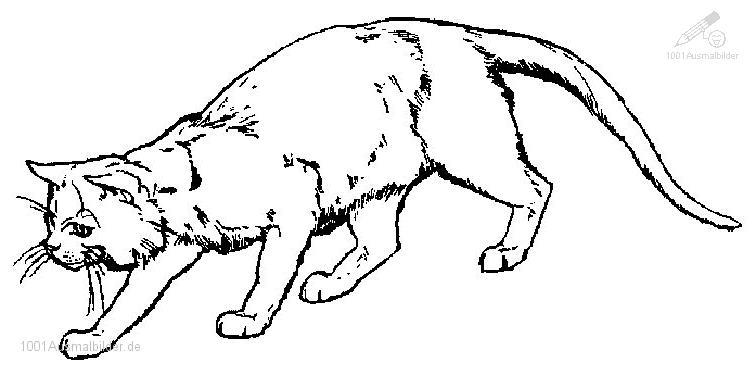 1001 Ausmalbilder Tiere Katze Ausmalbild Katze