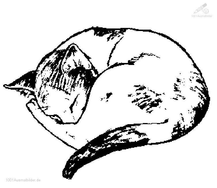 Ausmalbild Katze Schlaft