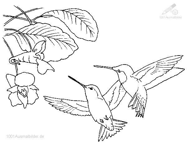 Vogel Zum Ausmalen Kostenlos
