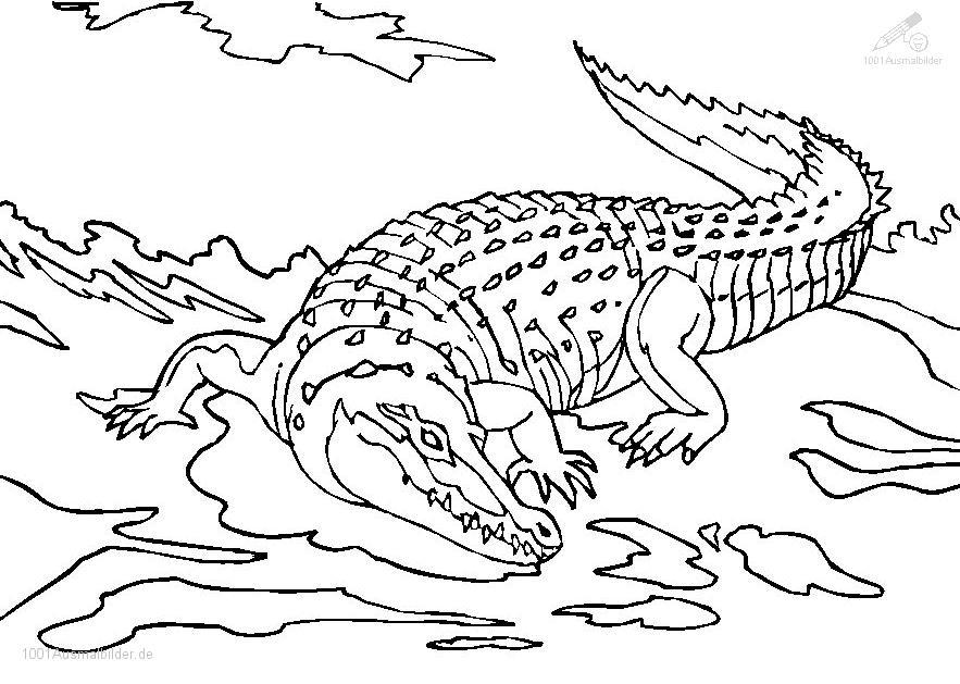 Ausmalbild Krokodil