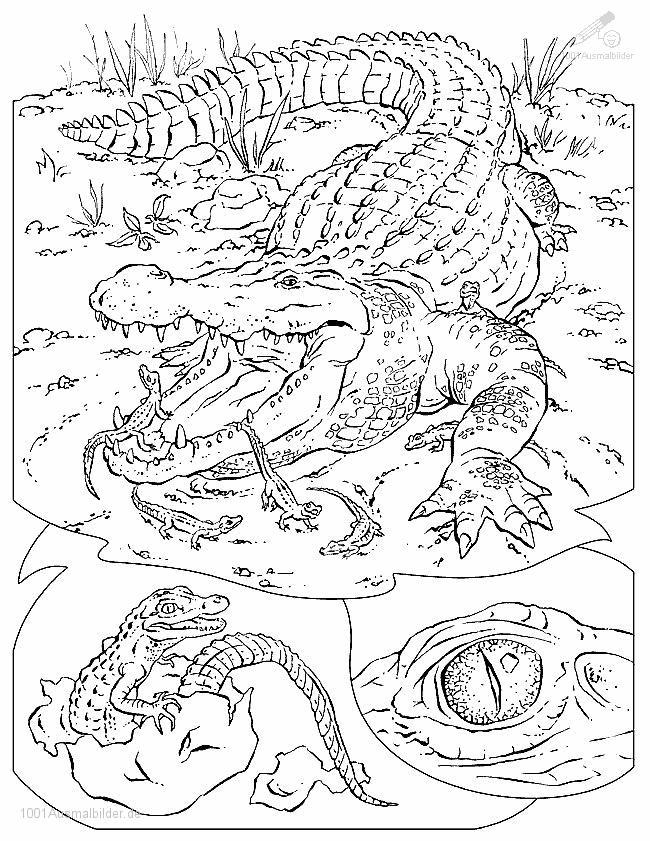 Ausmalbild: ausmalbild-krokodil-3