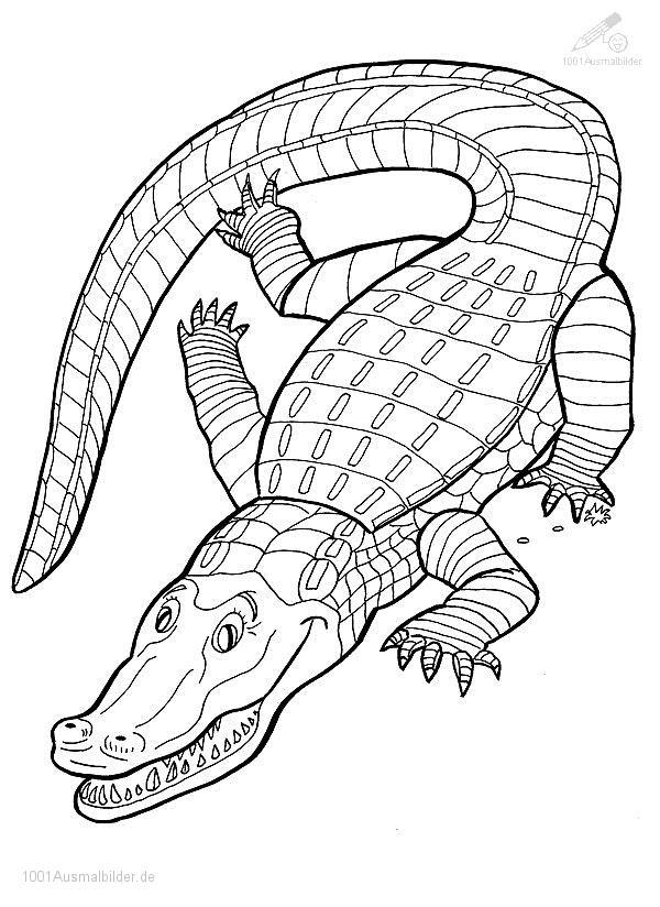Ausmalbild: ausmalbild-krokodil-6