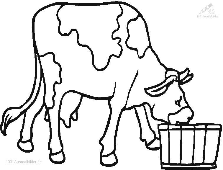 Ausmalbild Trinkende Kuh