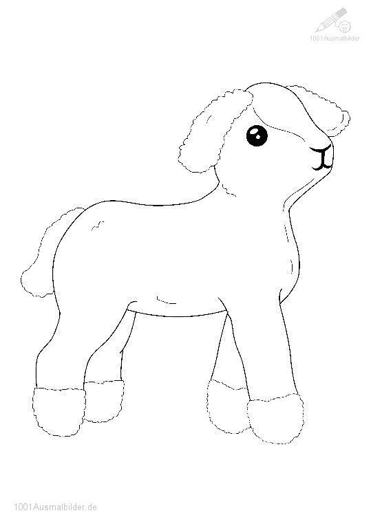 Ein Kleines Lamm