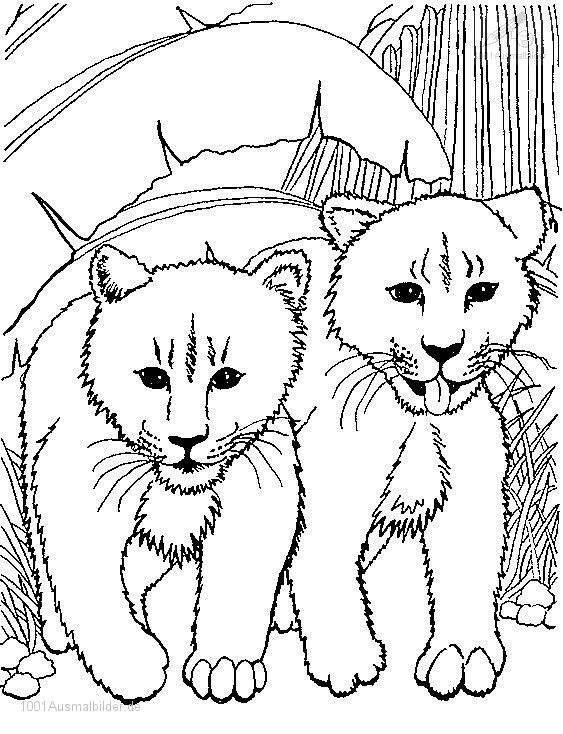 1001 AUSMALBILDER : Tiere >> Lowe >> Ausmalbild Junge Lowe