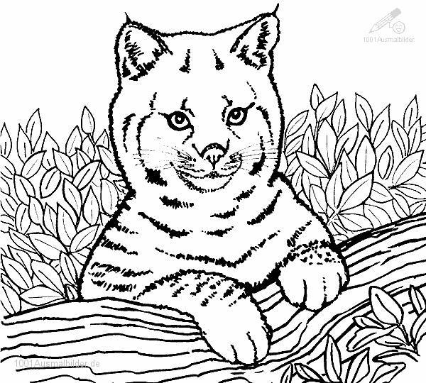 1001 Ausmalbilder Tiere Lowe Ausmalbild Junge Lowe