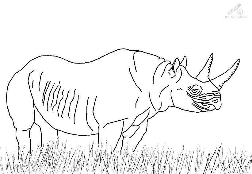Ausmalbild Nashorn