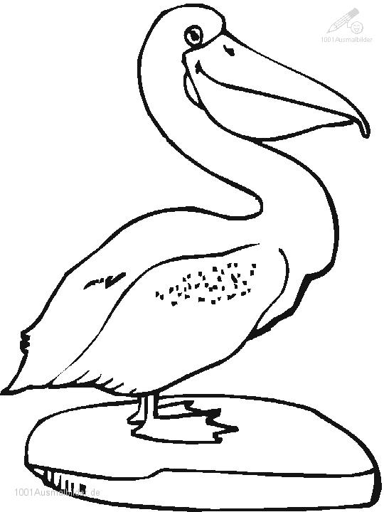 Ausmalbild Pelikan