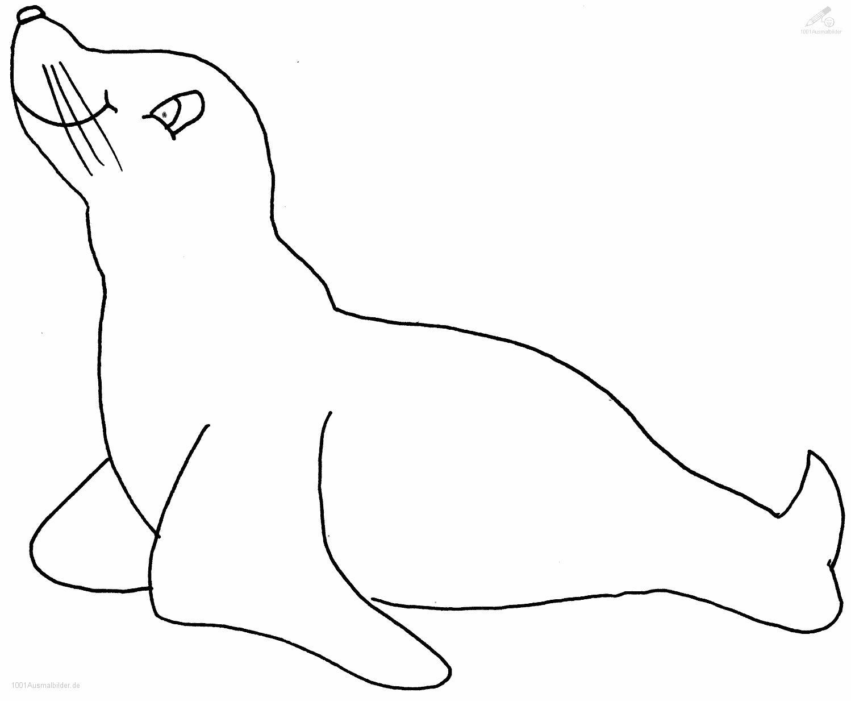 1001 Ausmalbilder Tiere Robbe Ausmalbild Robbe