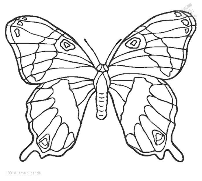Ausmalbild Ausmalbild Schmetterling 1