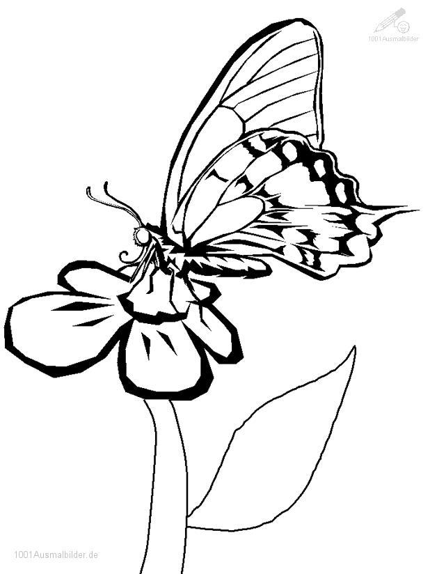 1001 Ausmalbilder Tiere Schmetterling Ausmalbild Schmetterling