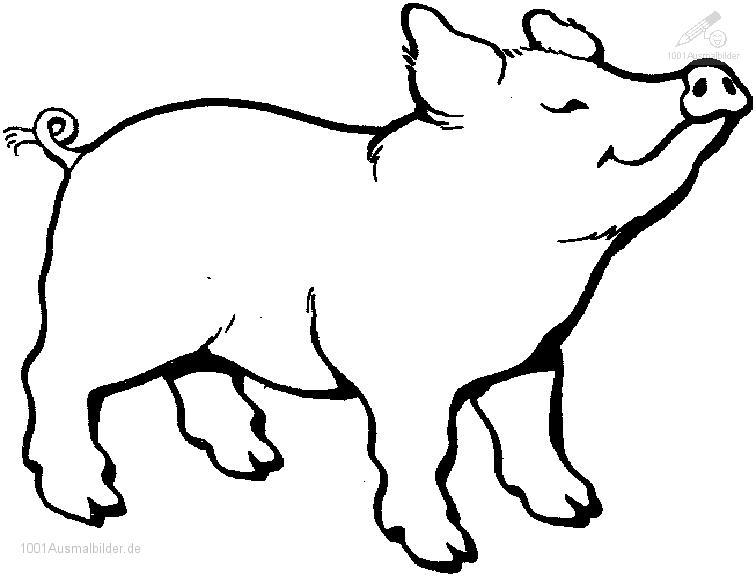 Ausmalbild Schwein