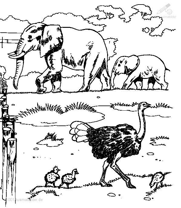 1001 AUSMALBILDER : Tiere >> Vogel >> Ausmalbild Strauss&#8221; title=&#8221;1001 AUSMALBILDER : Tiere >> Vogel >> Ausmalbild Strauss&#8221; width=&#8221;200&#8243; height=&#8221;200&#8243;> <img src=