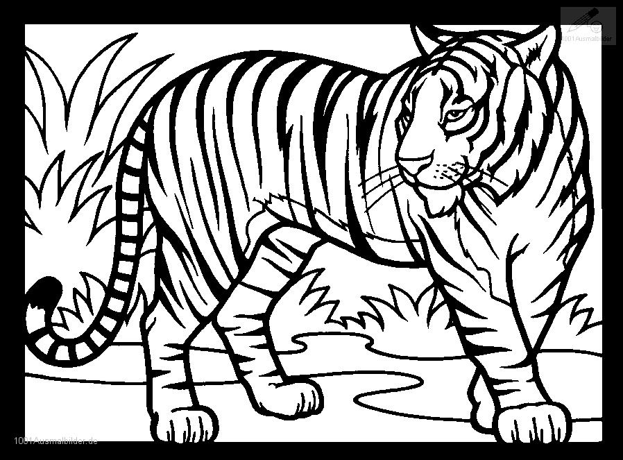 malayan tiger drawing - photo #27