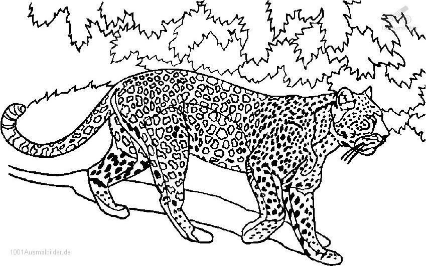 1001 Ausmalbilder Tiere Tiger Ausmalbild Tiger