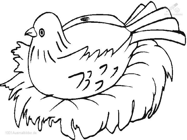 1001 Ausmalbilder Tiere Vogel Ausmalbild Vogel Am Nest
