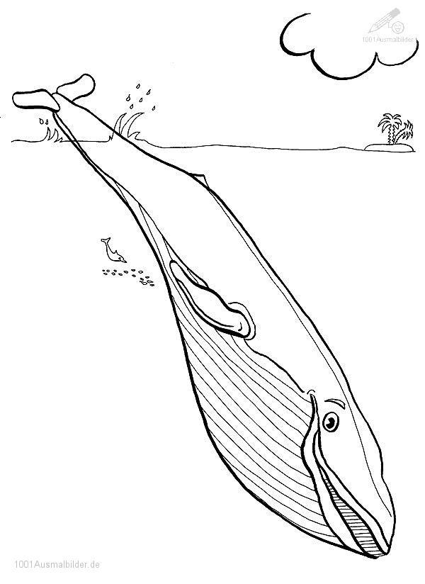 Tiere >> Wal >> Ausmalbild Wal