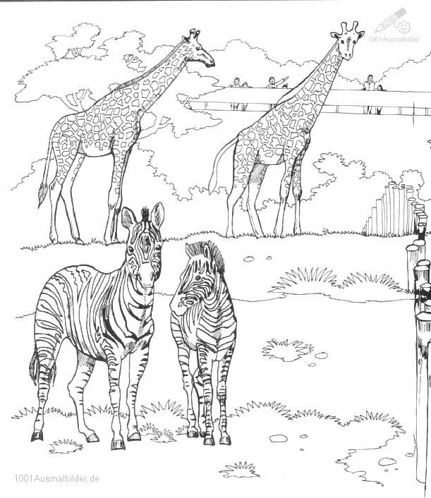 Ausmalbild Zebra