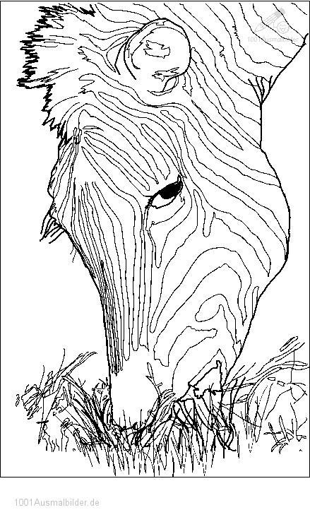 1001 Ausmalbilder Tiere Zebra Ausmalbild Zebra Kopf