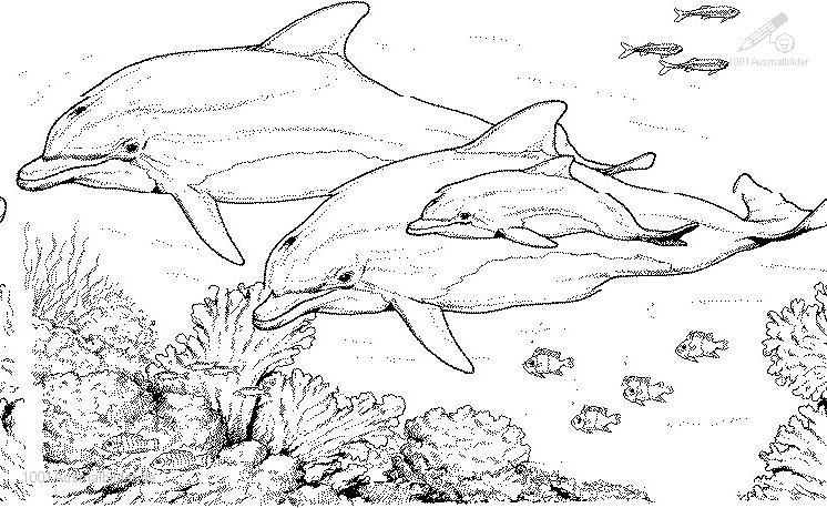 Ausmalbild Delphin