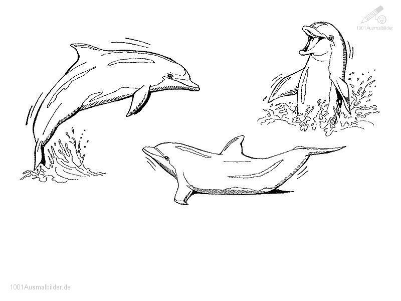1001 AUSMALBILDER : Tiere >> Delphin >> Ausmalbild Delphin